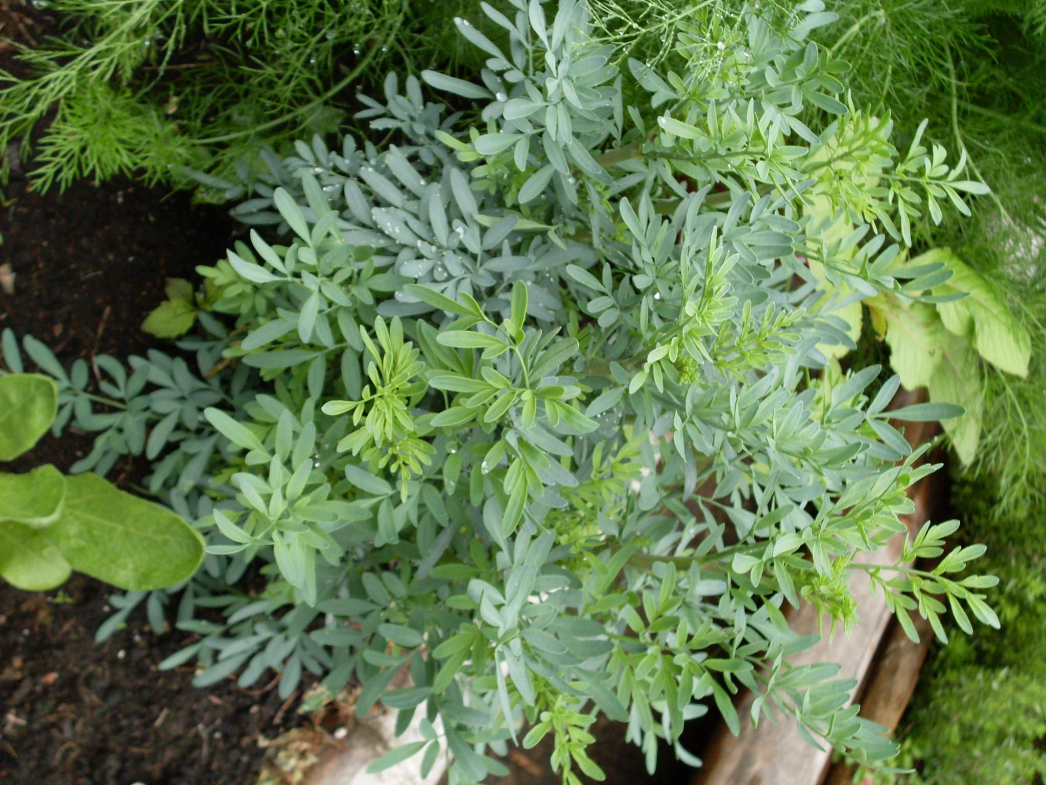 preservar las plantas medicinales y la gran tradición ancestral de