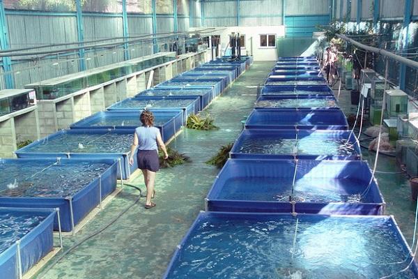 Impulsan desarrollo tecnol gico acu cola for Criadero de camaron en estanques circulares
