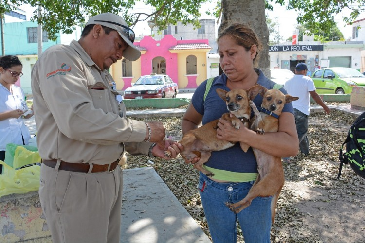 In breach of the SSA campaign of rabies vaccine - Tribuna Campeche 1