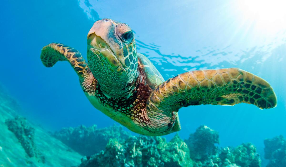 Resultado de imagen de animales en peligro de extinción por el cambio climatico