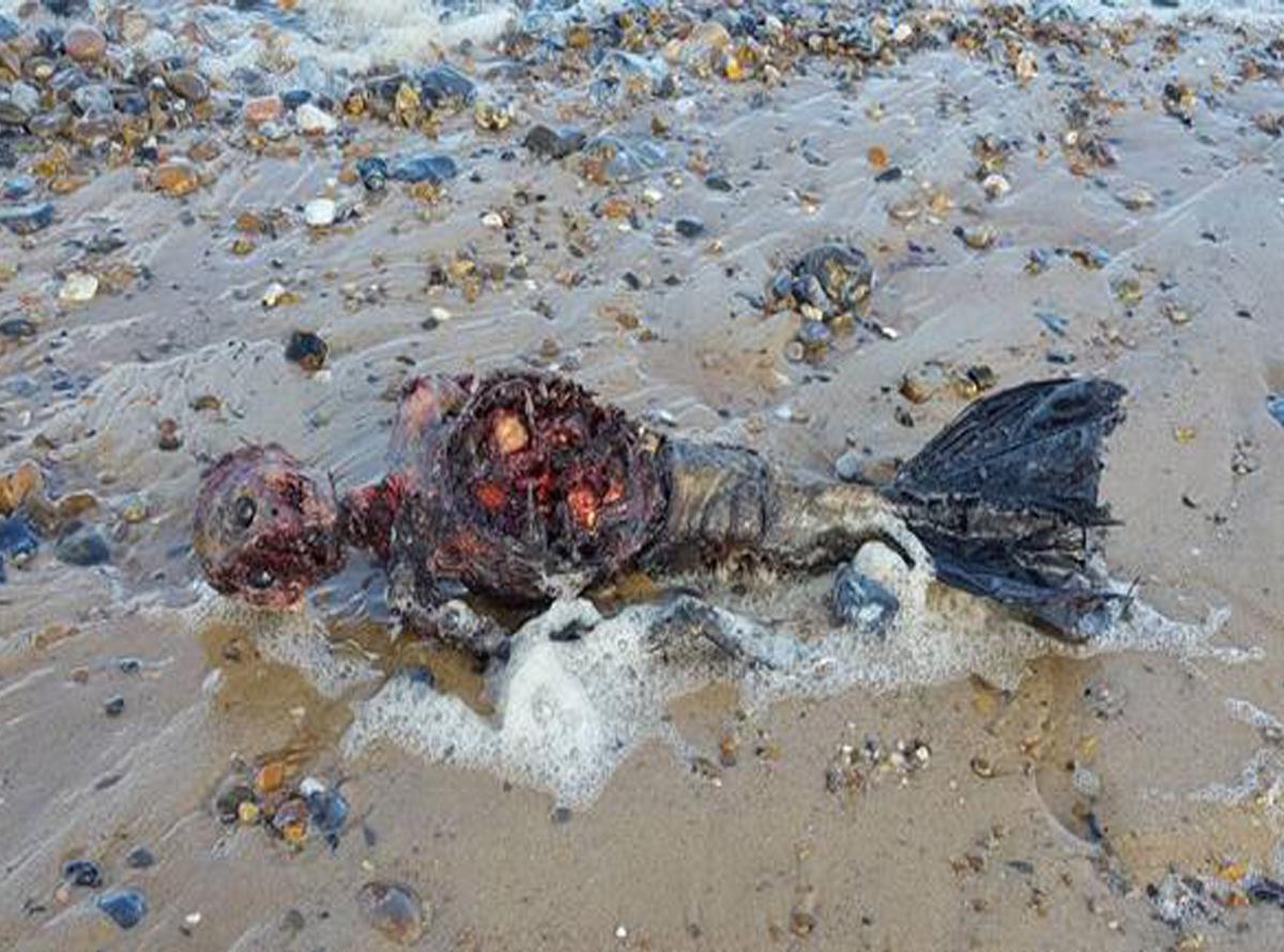 Vídeo: Cadáver de una supuesta sirena aparece en Reino Unido