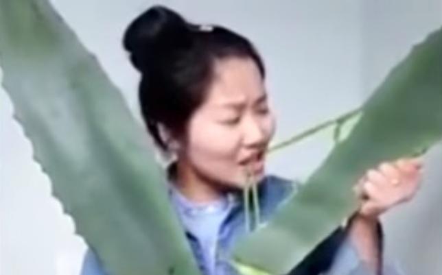 Transmite en vivo mientras come planta tóxica por error