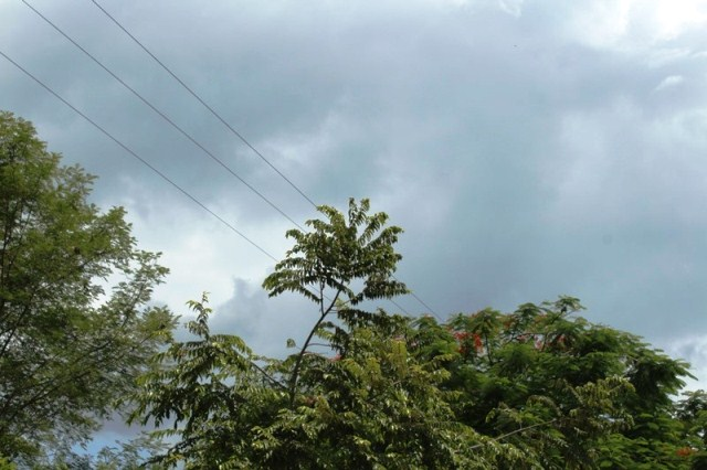 Ramas de árboles pegan con cables de alta tensión; peligro