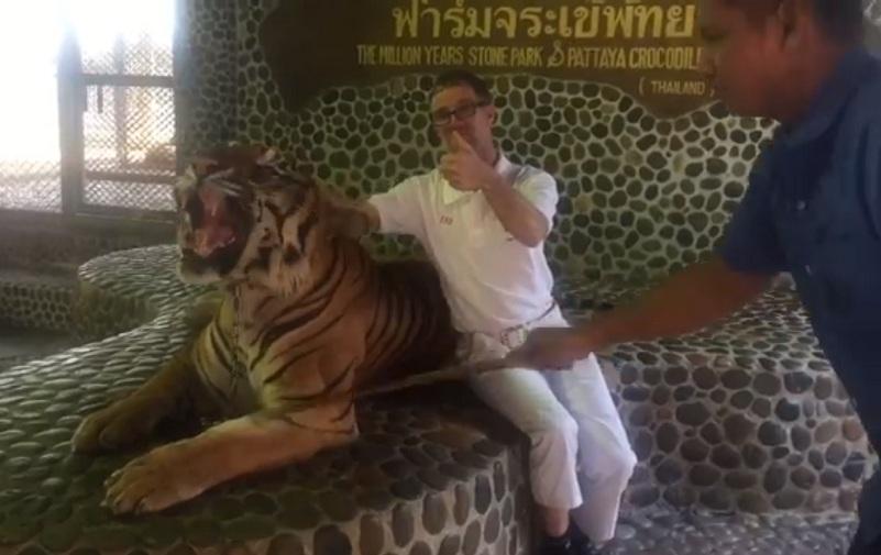 Maltrato a tigre para selfies de turistas indigna a Tailandia